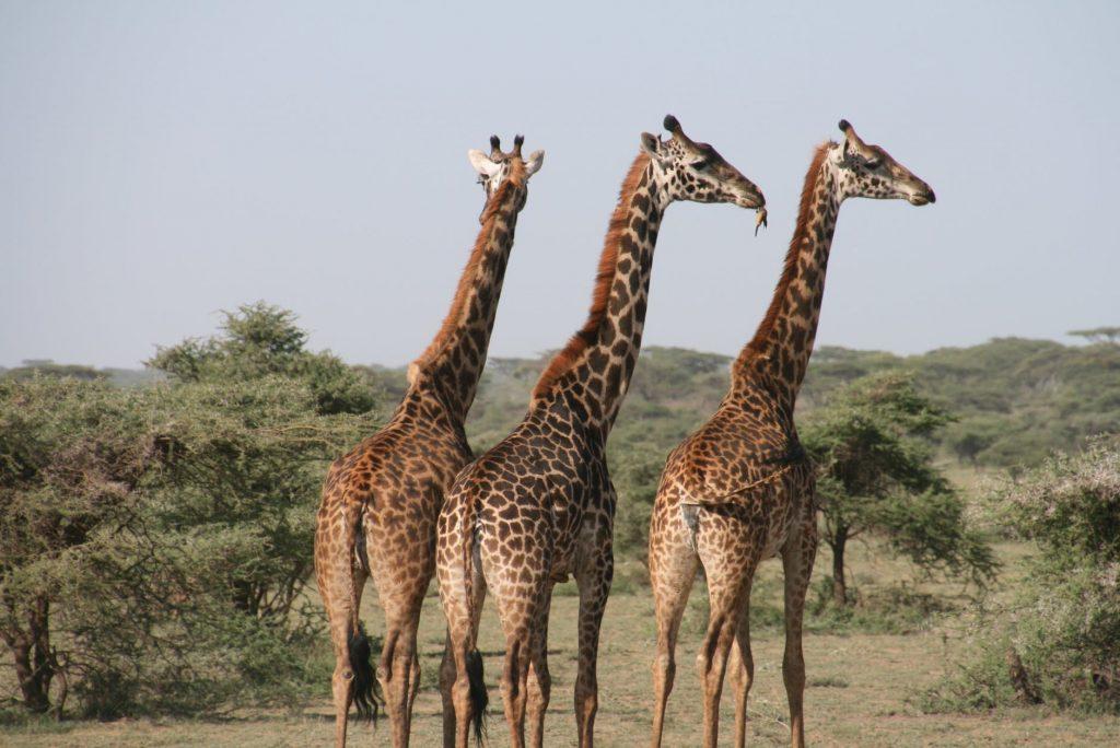 africa animal photography animals blur